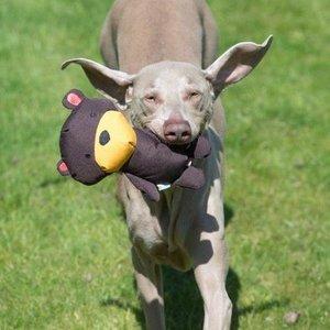 Beco - Pluche Knuffelbeer voor je Hond - S/M/L