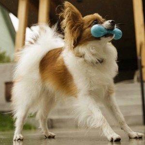 Honden Kauwbot Onverslijtbaar