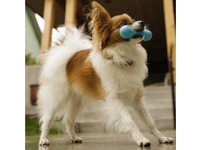 Onverslijtbaar Kauwbot voor Hond - West Paw Zogoflex Hurley -  in Blauw, Groen of Oranje in XS/S/L - B Corp