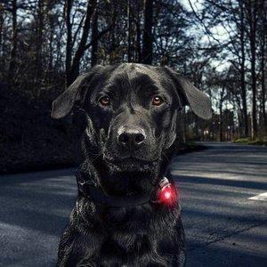 Lampje voor Honden Orbiloc LED Dualsafe