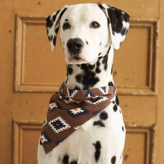 Trendy Bandana voor Honden