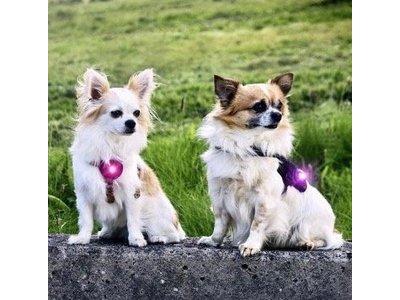 Orbiloc Dual Veiligheidslampje voor Honden