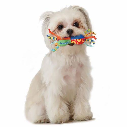 Kauwspeeltjes voor Kleine Honden 3 Stuks