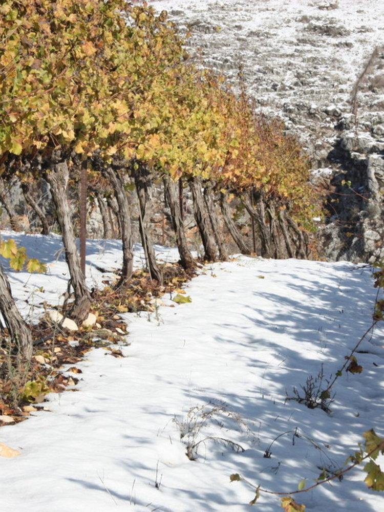 Galil Mountain Gewurztraminer 2018