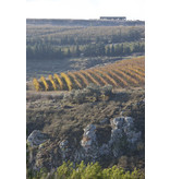 Galil Mountain 'Ela' 2015