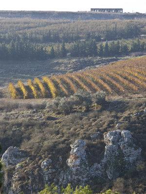 Galil Mountain 'Ela' 2016
