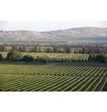 Galil Mountain Flagship wine 'Yiron' 2015