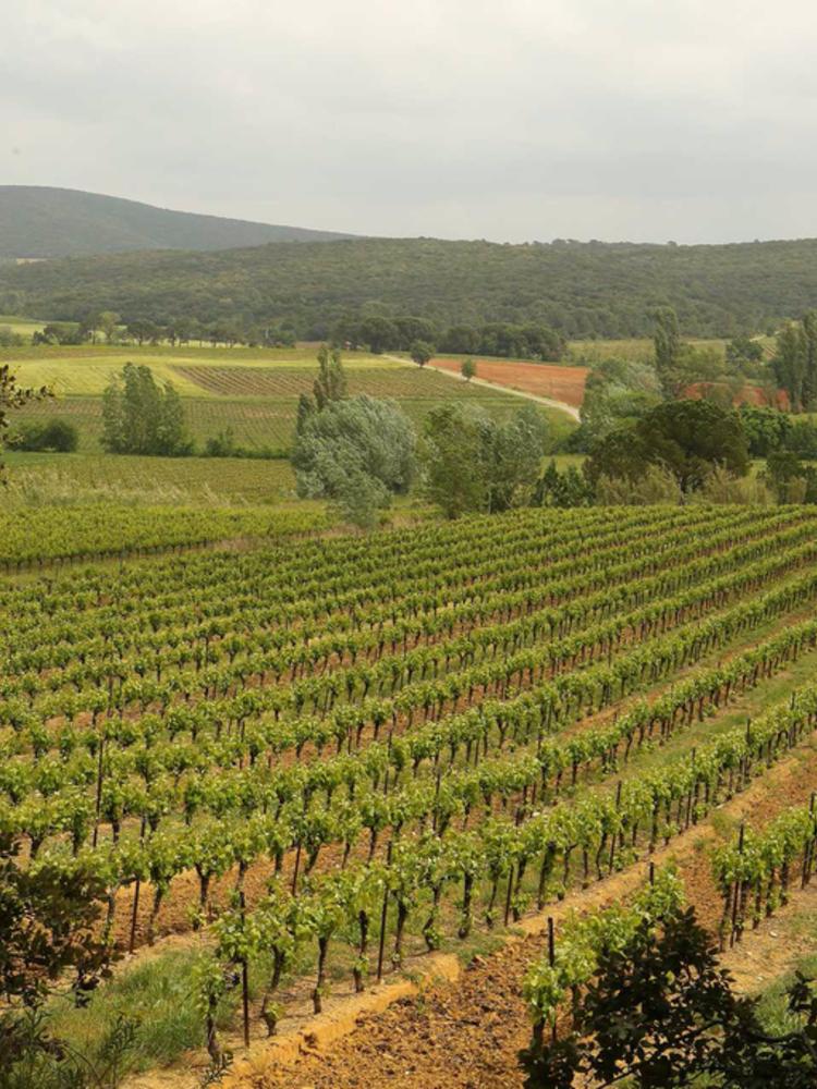 Quartier de Menilmontant Chardonnay de Menilmontant 2019