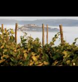 Benvenuti Malvazija Istarska 2018