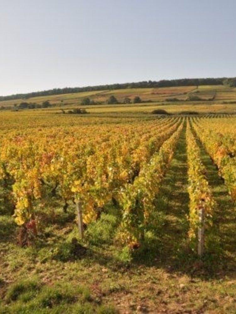 Sylvain Loichet Cote de Nuits-Villages Reserve de la Comtesse 2018