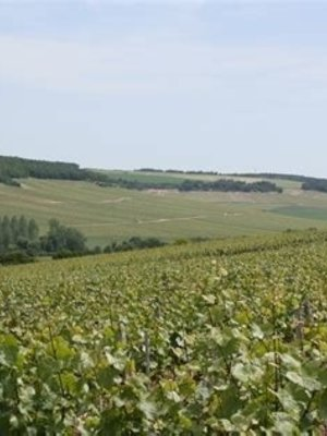 Jean Goulley Chablis 1er Cru 'Fourchaume' 2014