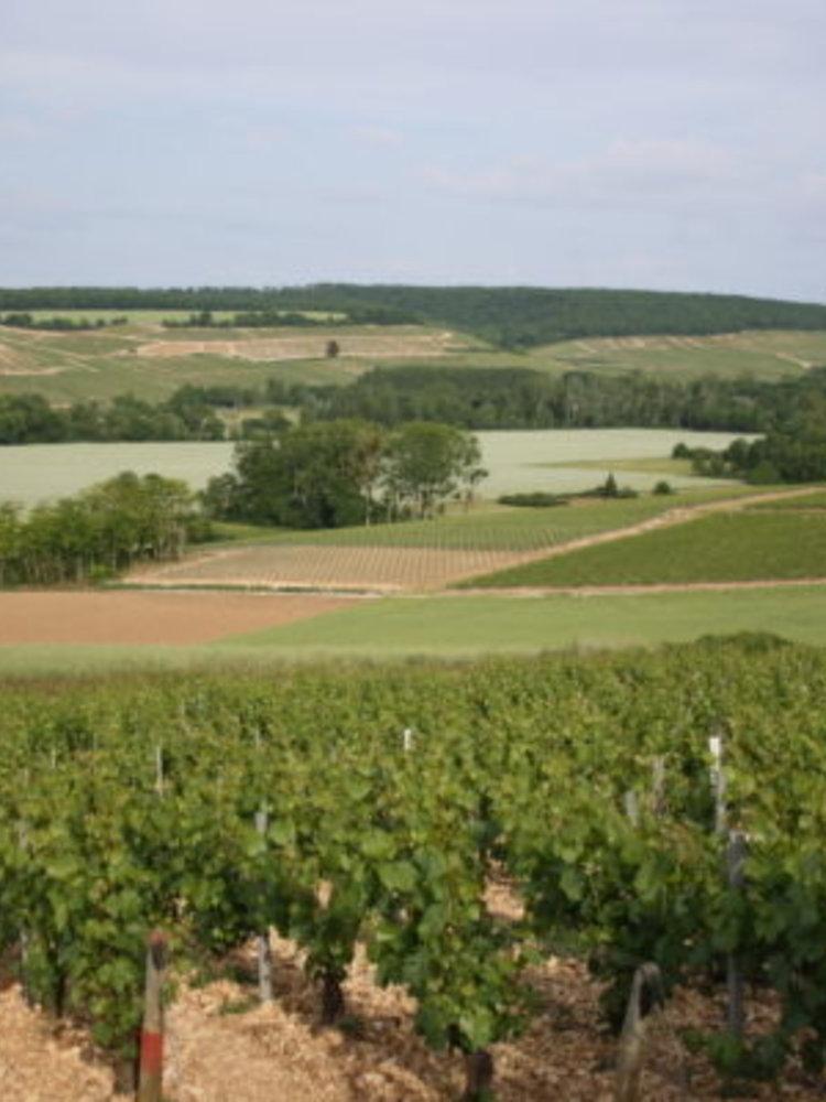 Jean Goulley Chablis Mont de Milieu 1er Cru 2019