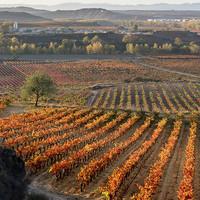 Prudencio, Rioja uit de bergen