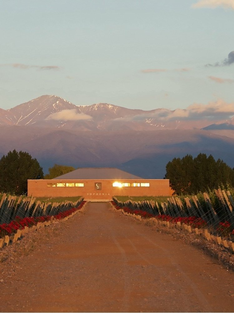 Sophenia Synthesis Sauvignon Blanc 2019