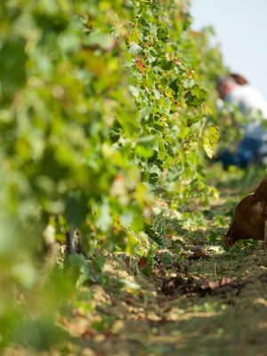 Grand Launay Rouge 2018