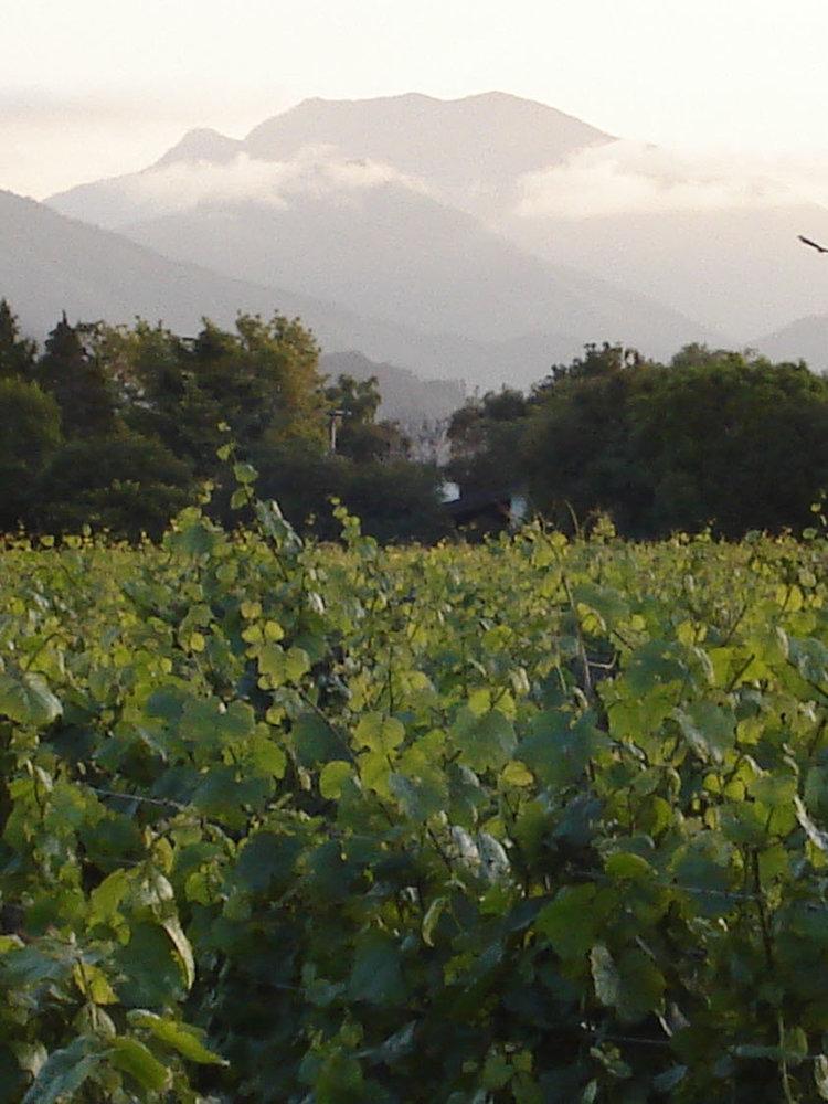 Richmond Plains - 15700728 Sauvignon Blanc 2019