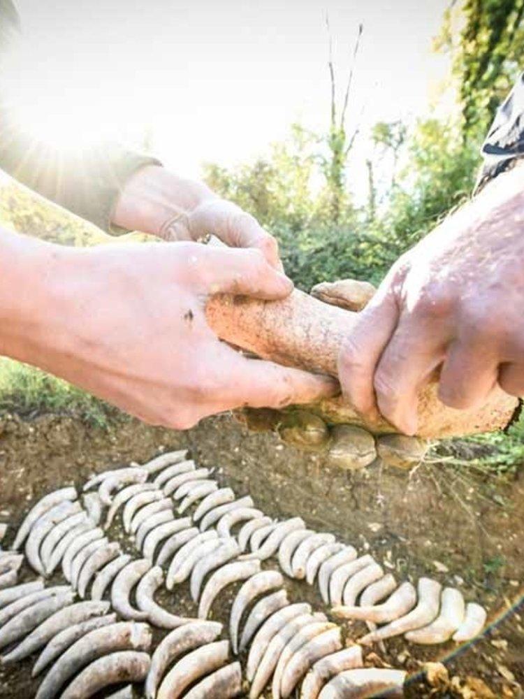 Clos Puy Arnaud Grand Vin 2012 - Magnum 1,5L