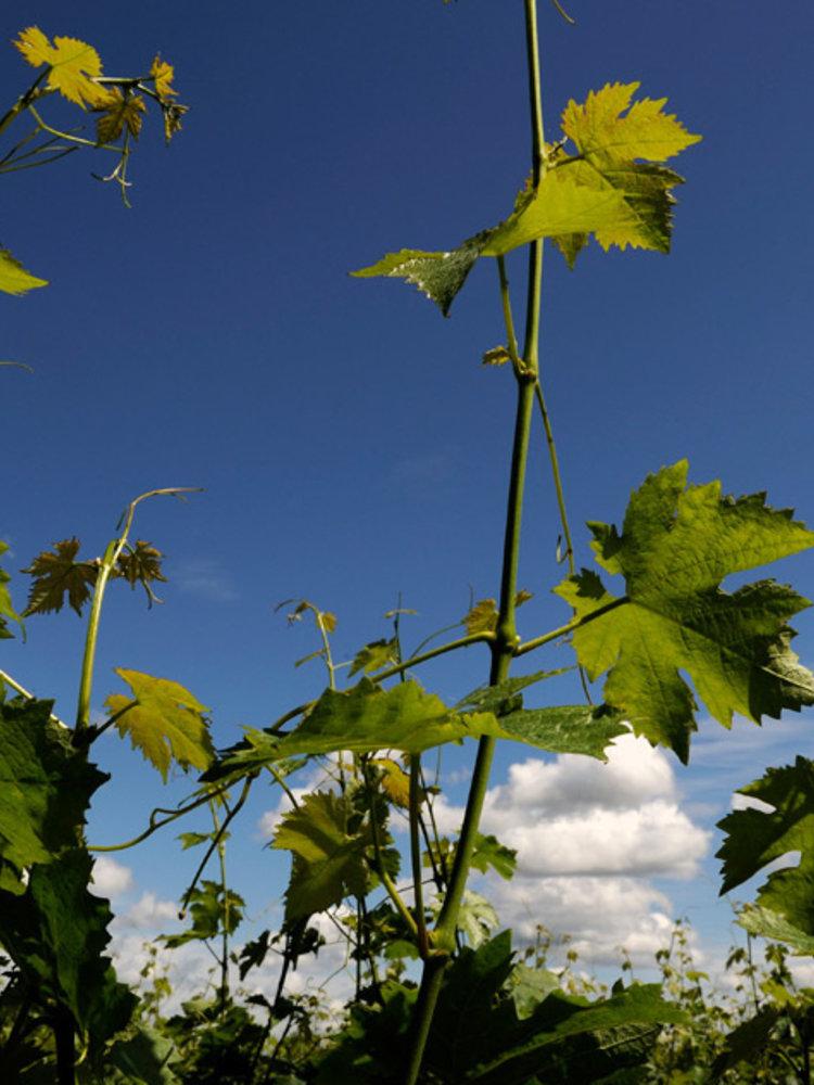 Clos Puy Arnaud Grand Vin 2015 - Magnum 1,5L