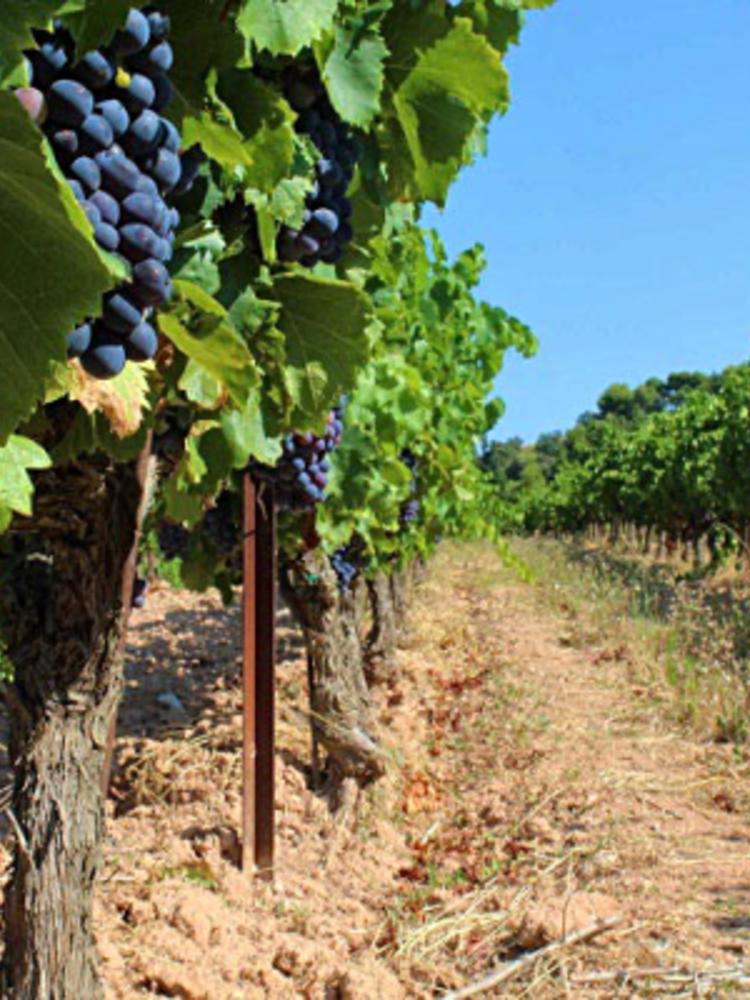 Clos de Caveau Vacqueyras, Fruit Sauvage 2015