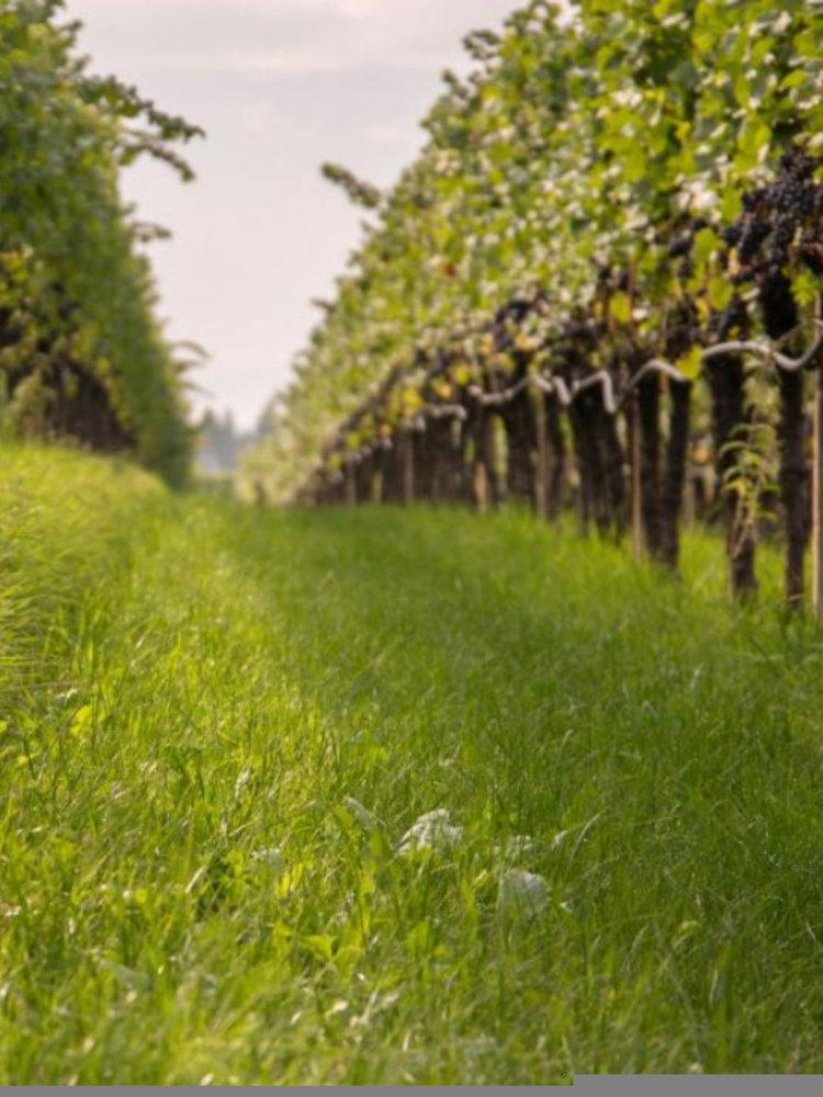 St. Michael Eppan Pinot Grigio  Sanct Valentin 2016 - Magnum 1,5L
