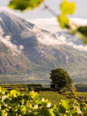 St. Michael Eppan Pinot Nero Classico 2017 - Demi 0,375L