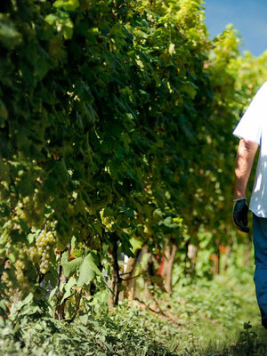 Cantine LVNAE Bosoni Niccolò V Riserva 2009