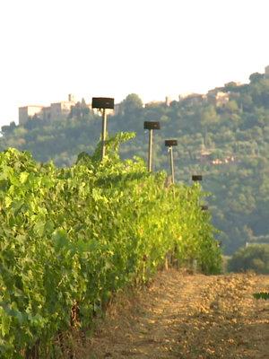 Paradiso di Frassina Mozart Brunello di Montalcino 2015