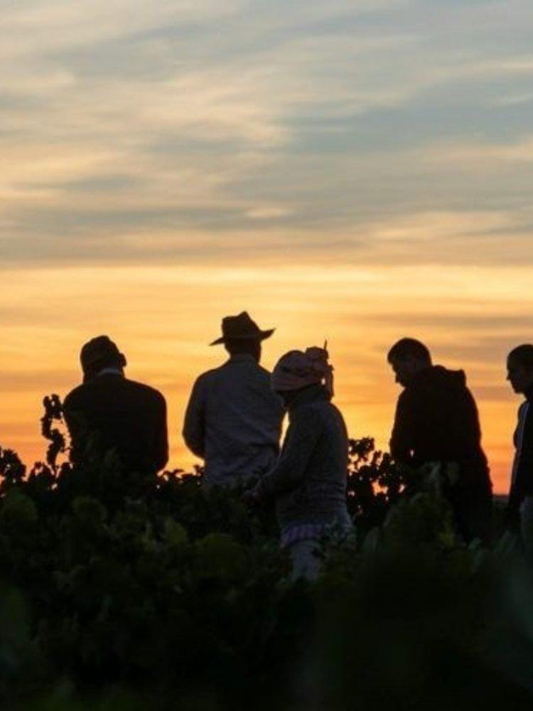 Cuatro Rayas Dama del Lago Rueda Verdejo 2019