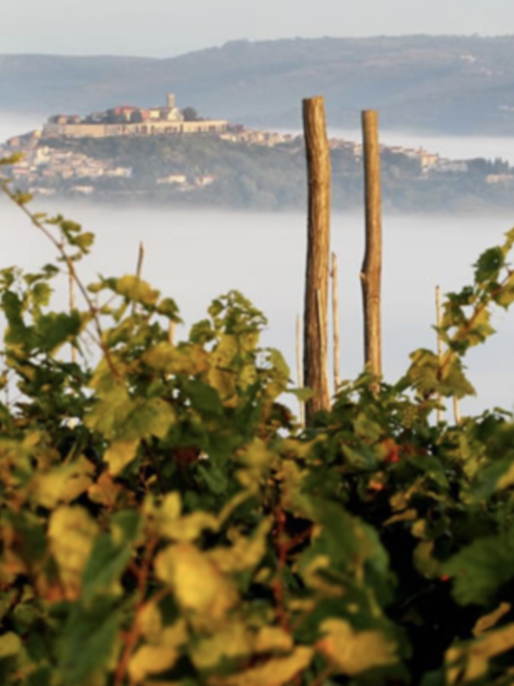 Benvenuti Anno Domini Malvazija Istarska 2015