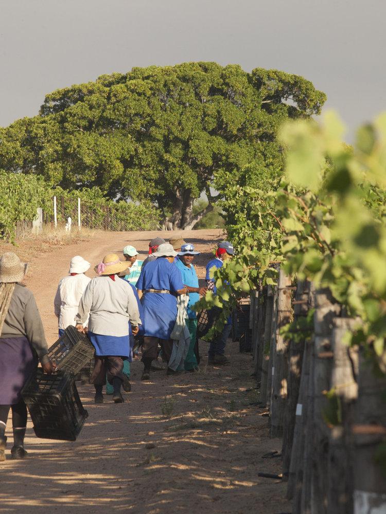 The Winery of Good Hope Vinum Cabernet Sauvignon 2014