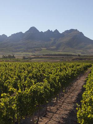 The Winery of Good Hope Land of Hope Chenin Blanc 2014