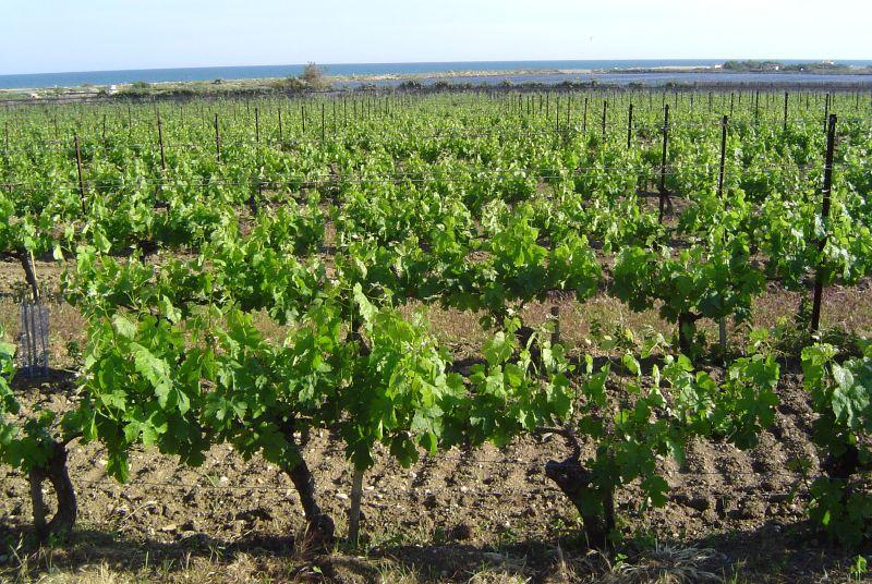 Well of Wine Chardonnay 2018