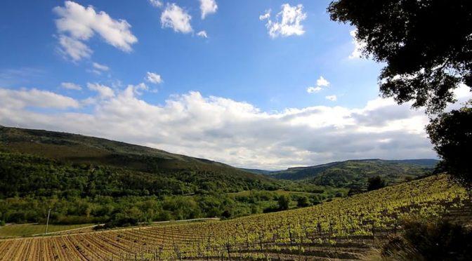 Well of Wine Viognier 2018