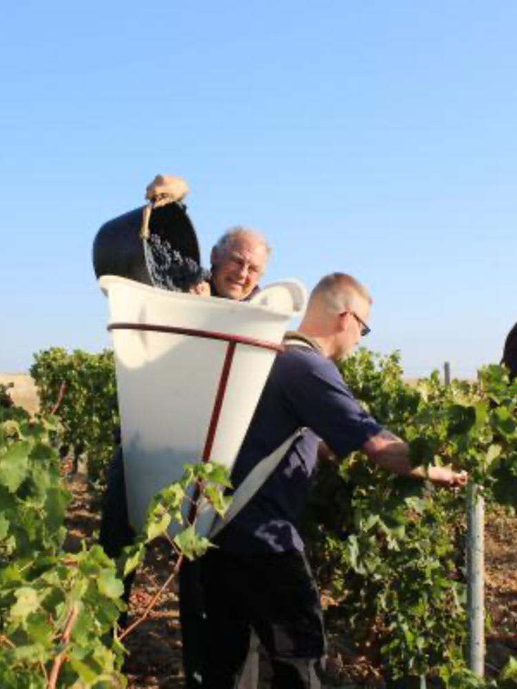 Reuilly Blanc Les Fossiles 2019