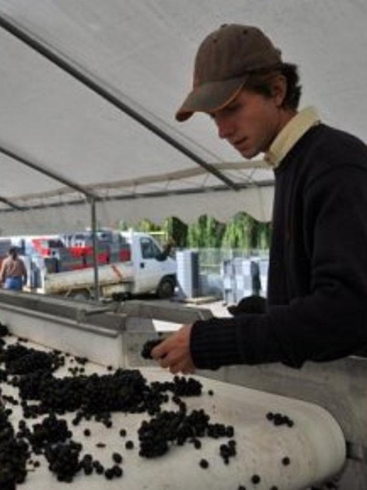 Sylvain Loichet Bourgogne Chardonnay 2018