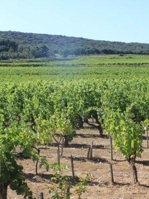RocheColombe Côtes du Rhône Clairette 2019