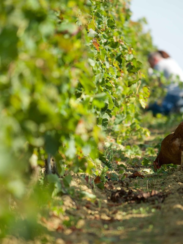 Grand Launay Rouge Pour Amelie 2019