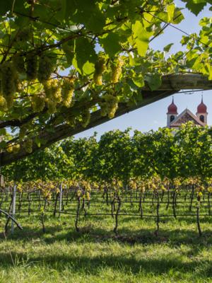 St. Michael Eppan Chardonnay Classico 2019