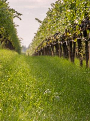 St. Michael Eppan Chardonnay Sanct Valentin 2018