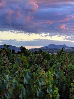 La Bodega de Pinoso Vergel Tinto 2019