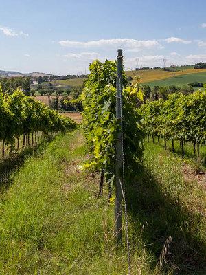 Marchetti Villa Bonomi Riserva 2012