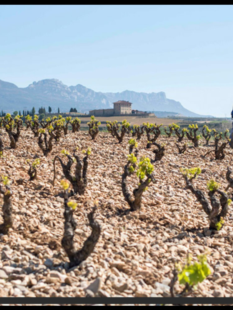 Lopez de Haro Rioja Crianza 2018 - Magnum 1,5L