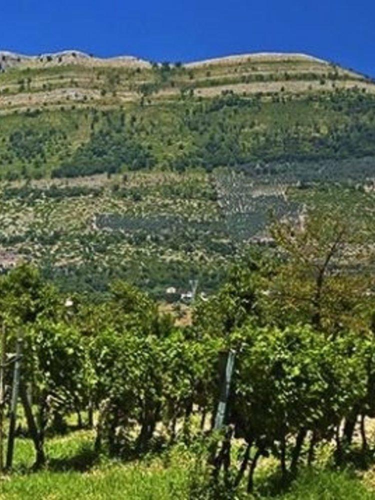 Montevetrano Montevetrano 2001