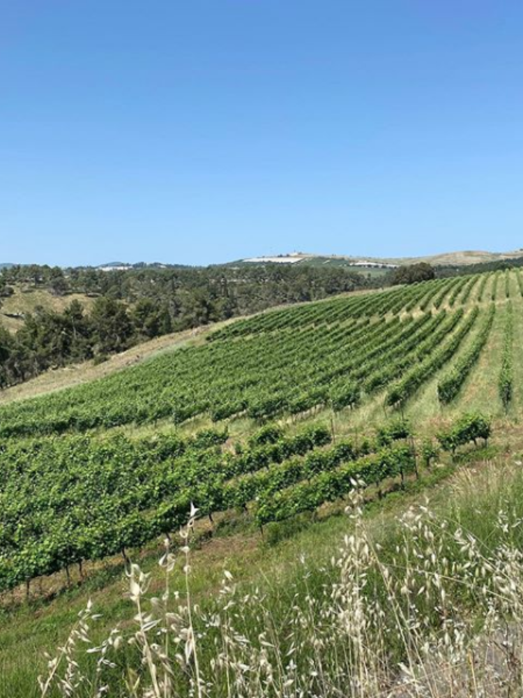 Galil Mountain Syrah 2019