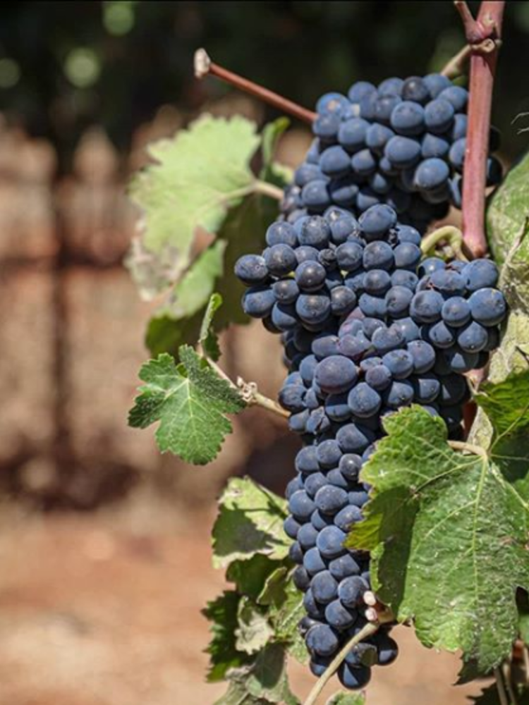 Galil Mountain Meron 2017 - Flagship wine