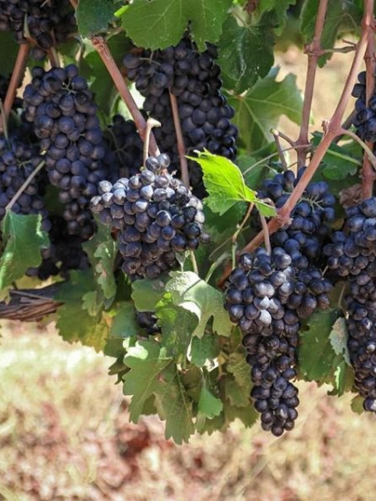 Galil Mountain Yiron 2017 - Flagship wine