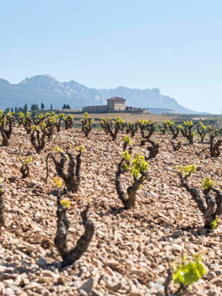 Lopez de Haro Rioja Seleccion de 30 Barricas