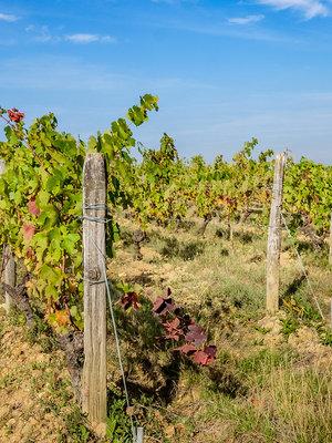 Domaine Joël Delaunay La Brossette Touraine Sauvignon Blanc 2020