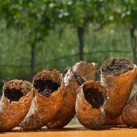 Kwaliteitsrevolutie in de wijnwereld dankzij Rudolf Steiner
