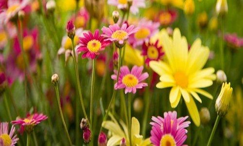 Millefiori Melody Flowers